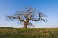 Understanding the organisational tree is key in understanding convergence