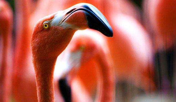 Milestone XProtect And Axis Cameras Ensure Animal Welfare At Dublin Zoo