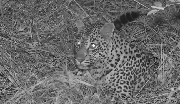 Raytec VARIO2 IR Illuminators Capture New Wild Animal Footage in Kruger National Park, South Africa