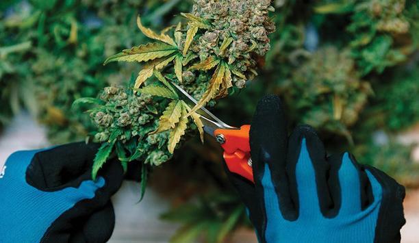 Salient Systems Emphasizes On How Surveillance Solutions Ensure Cannabis Compliance