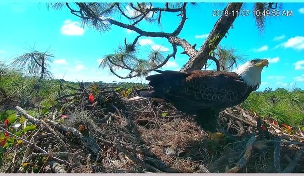 Florida Cattle Ranch Installs Dahua PTZ Cameras For Its Bald Eagles