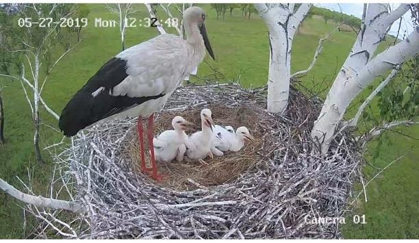 Hikvision cameras provided by WWF Russia aid in monitoring the hatching of endangered oriental storks in Amur, Russia