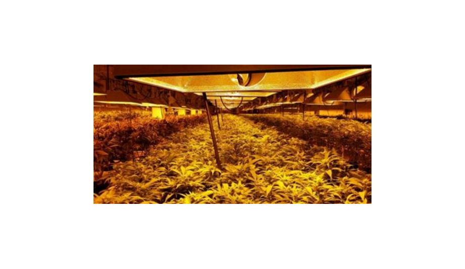 OPTEX REDSCAN Laser Detectors Deployed For High Security Detection At The Medical Marijuana Grow Op Facilities