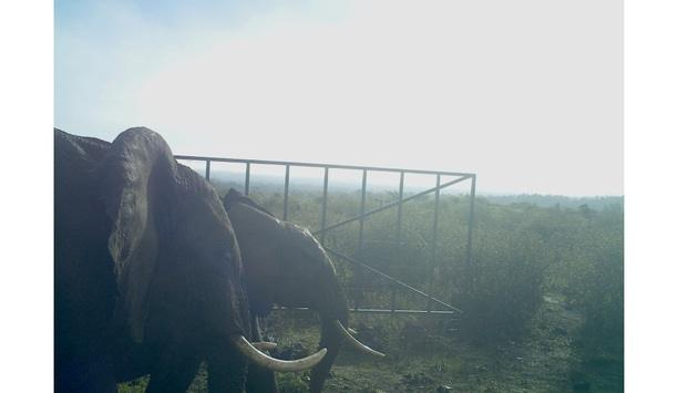 Intelligent Light Detection And Ranging (LiDAR) Sensors From Optex Protect Endangered Elephants In Mount Kenya National Park